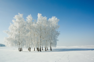 Cold winter day, beautiful hoarfrost and rime on trees