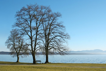 Three trees at the lake Starnberg in Bavaria, Germany