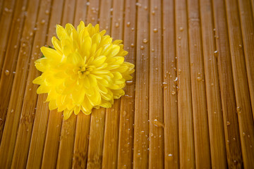 Yellow flower and water drops on bamboo close-up