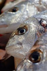 Three fresh fish close up