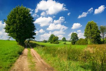 Lonely tree near country road. Mazury, Poland.