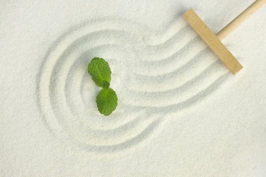 Green leaf on raked white sand of a zen garden
