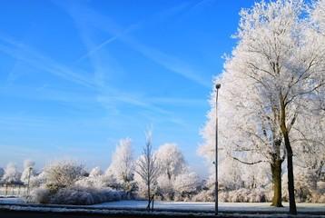Asphalt road, lamp, trees snow and blue sky