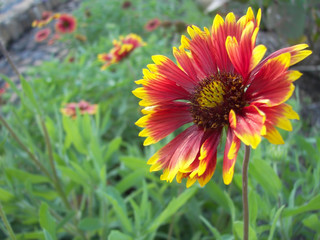 pretty red and yellow flower close up