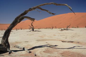 Sossusvlei trees