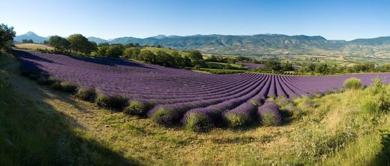 Printed roller blinds Lavender panoramique - champ de lavande Provencal