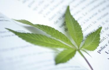 lutte anti-drogue