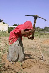 village woman working in field, rajasthan, india