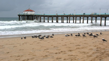 Seagulls and Pier