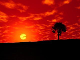 Coucher soleil africain