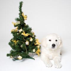 christmass puppy