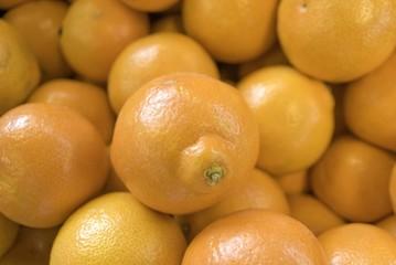 Oranges Horizontal Large