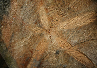 Stump close-up