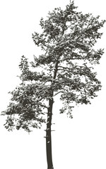 Isolated tree - 7. Vector