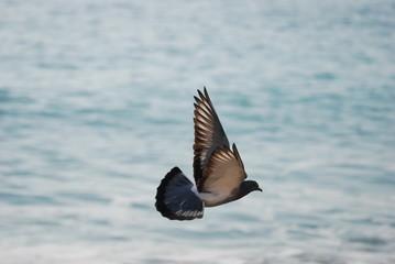 oiseau vol