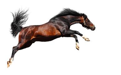 arabian horse jumps - isolated on white