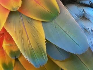 Photo sur Plexiglas Perroquets plume perroquet