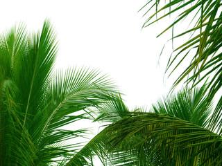bordure de palmes sur fond blanc