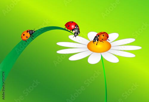 3 Marienkäfer Und Blume Stockfotos Und Lizenzfreie Bilder Auf