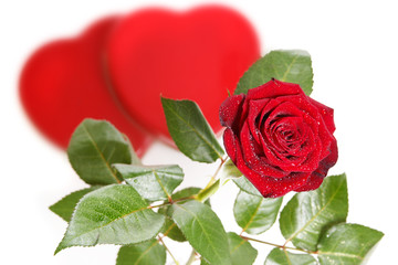 Single red rose with hearts on a white background