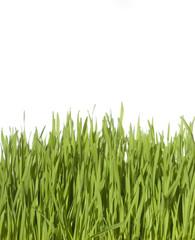 Erba verde e fresca