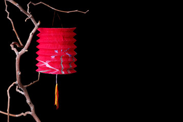 Red Paper Lantern on a Branch