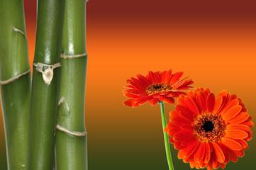 Wellness Blüten Bambus