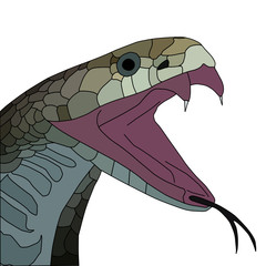 vector of aggressive cobra with open mouth