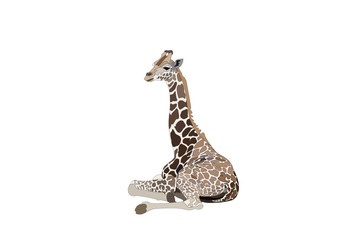 vector young one Giraffe relaxation
