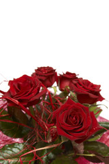 Beautiful bouquet of dark red roses on white