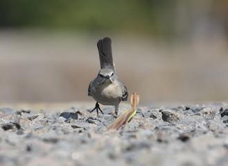 Fotoväggar - Mockingbird and Praying Mantis