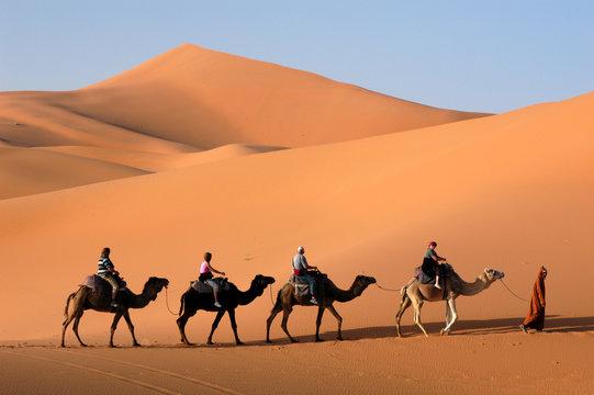 Camel caravan going the sand dunes in the Sahara Desert