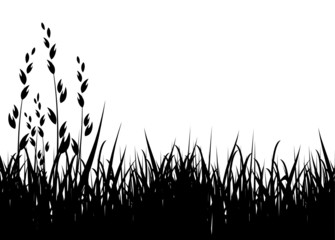 grass vector illustration / horizontal / black silhouette