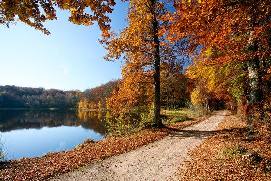 Chemin de forêt en automne avec arbres colorés près d'un lac