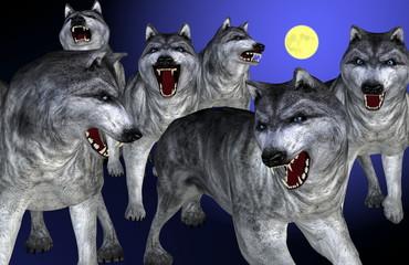 Wolf und Wolfsrudel