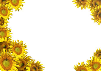 Collage - a decorative framework from sunflowers