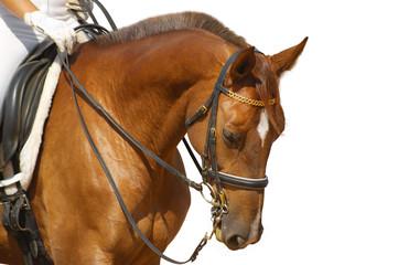 dressage, sorrel horse - isolated on white
