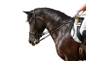 dressage, black horse - isolated on white