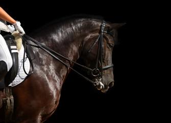 dressage, black horse - isolated on black