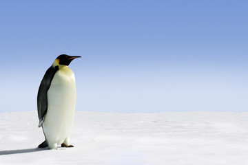 Photo sur Toile Pingouin Penguin in Antarctica on a sunny day