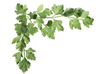 Top left corner composed of parsley leaves