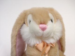 cute bunny rabbit toy