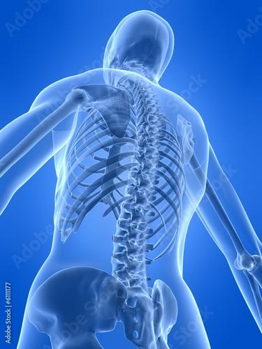 rückseite eines menschlichen skeletts\