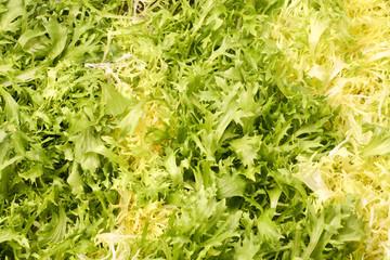 lettuce leaves - vegetarian background