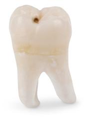 Human wisdom tooth