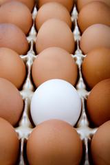 Rebel Egg