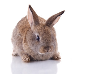 Cute bunny Isolated on white background.
