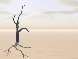 Tree on Desert.