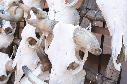 Cattle skulls on rack for sale