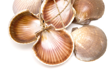 Detail of many sea shells isolated. Suitable for background
